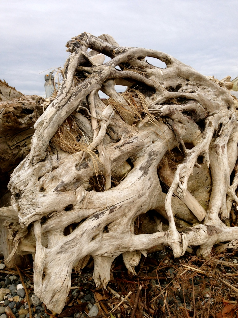 SABourne_driftwood