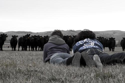 SABourne_montana_cattlewatching